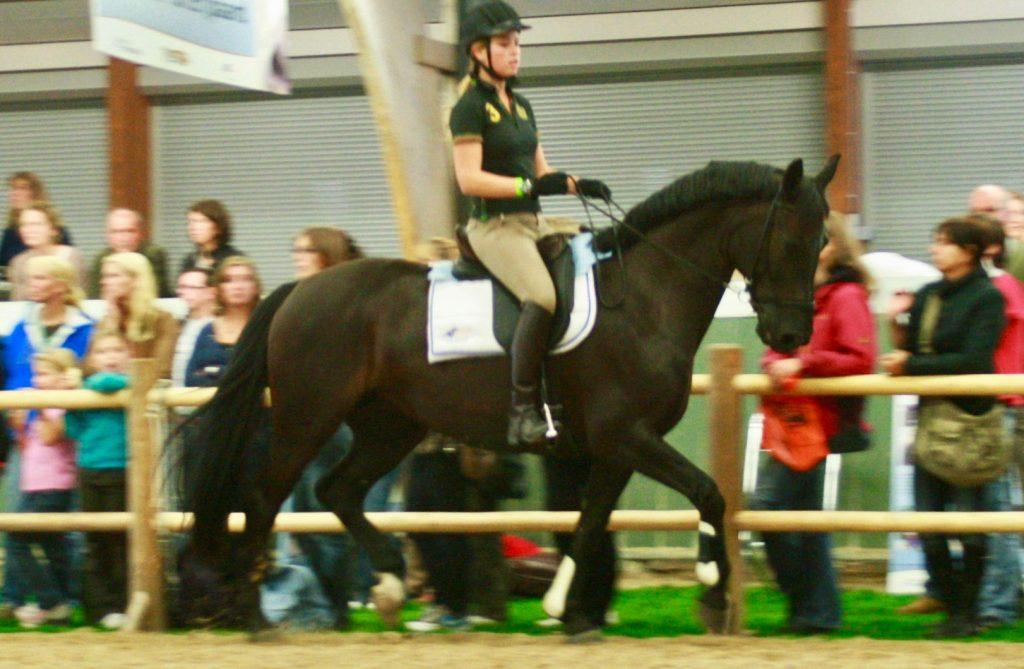 Clinic @Horse Event pressure measuring